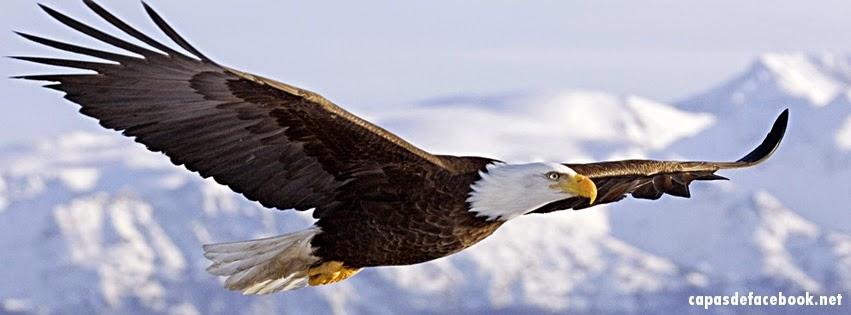 aguia-voando